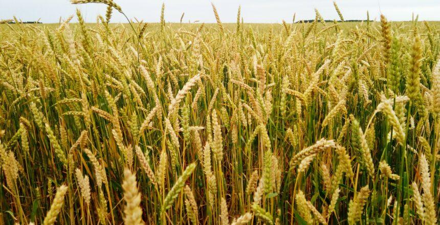 COVID-19-lengvatiniai-kreditai-žemės-ūkiui-paskola-parama-kredito-unija-LKU