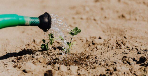 Dėl lengvatinių paskolų daugiausiai kreipiasi nukentėję nuo 2019 m. sausros
