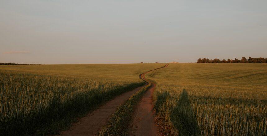 žemės ūkio kreditai lku kredito unijų grupė teikimas žemės ūkio paskolų garantijų fondas lengvatiniai kreditai